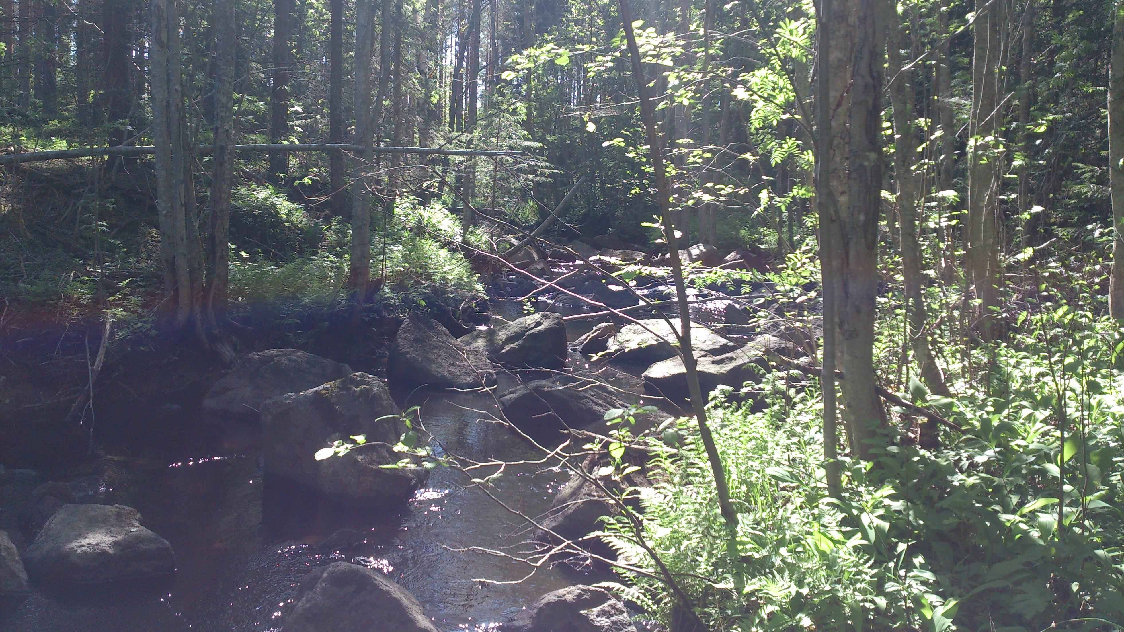 Stor bäck i sommargrönska